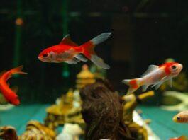 jakie rybki do akwarium