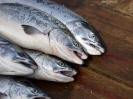 jakie ryby jeść