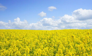 Jak pozbyć się roślin niepożądanych z upraw